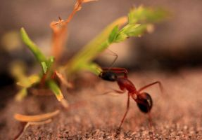 Not-So-Tiny Ant 2 by Coraloralyn