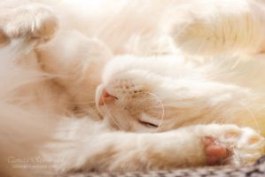 Curled up by TammyPhotography