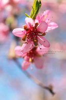 Pink Softness by MadSubstance