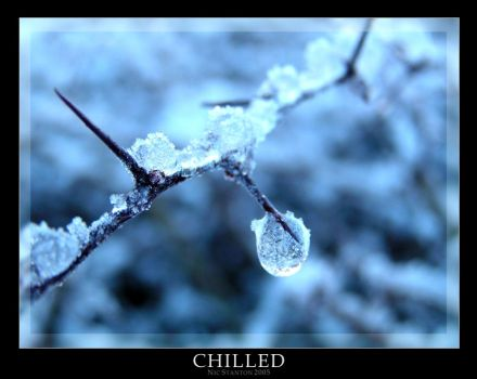 Chilled by Whippeh