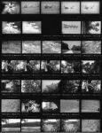 ContactSheet 001 small by NemoNameless
