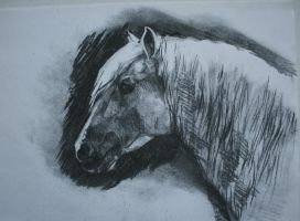 charcoal study nov 1 by howlinghorse