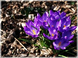 flowers01 by jvg2