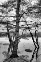 tree surrounded by water by bambi1964