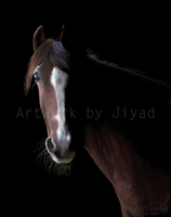 Arabian by Jiyad