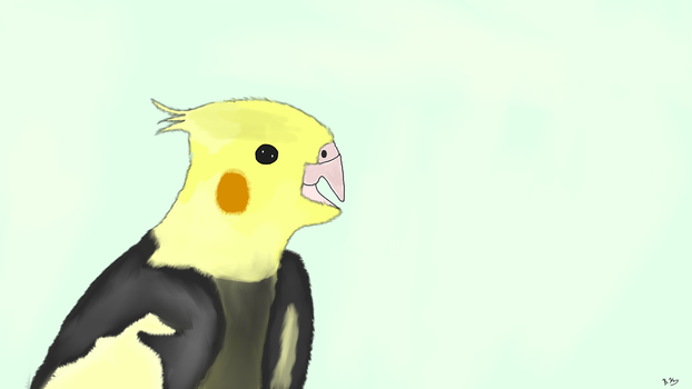 A Cockatiel[Request] by BKASSASSIN