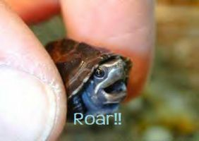 baby turtle roar by WolfOfFury