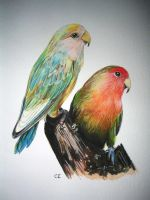 lovebirds by delph-ambi
