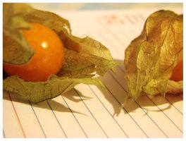 physalis duo 3 by moodyline