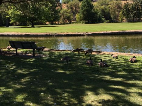 The Geese Have Invaded by MoonOfSouls