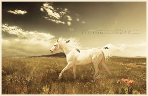 with peace comes freedom.. by devils-horizon