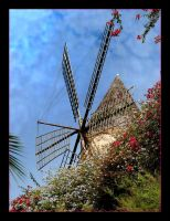Colours And Windmill - Palma - Mallorca by skarzynscy