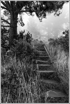 The Path Forgotten by The-Photographers