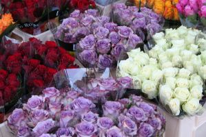 roses at market in Aachen 2 by ingeline-art