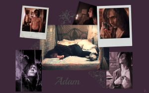 Adam.WP by LizzyRoseLevalcourt