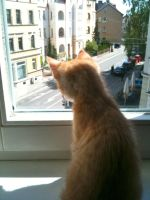 garfield looking outside by Naddchen