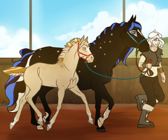 Into the Ring by SpytFyre-Ranch
