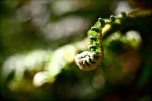 fern by 08brooky80