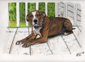 Commission: Pit Bull mix by t3hsilentone