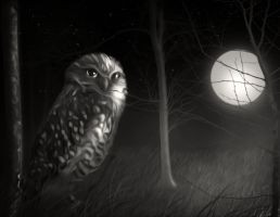 The night owl by hallbe