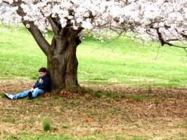 Brother and Cherry Tree by noxiousthunder
