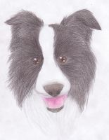 Border Collie Woof by stargirl5286