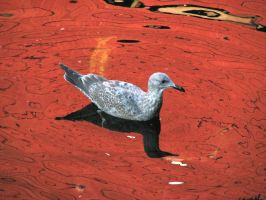 gull in red reflections by Glacierman54