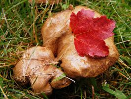 First Fall Leaf by PaganFireSnake