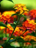Bright Cheery Flowers by Sharondipity