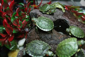 Turtles life by 9oo9a