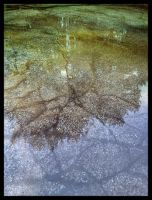 iPhoneography,   Micro-flood by Gerald-Bostock