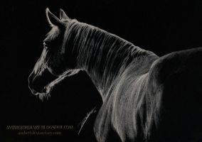 Monochrome Horse by AmBr0