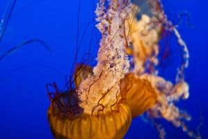 Dancing Jelly Fish by esoup13