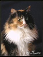 My princess cat - portrait 1 by Emberiza