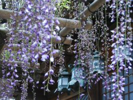 Lamps and Wisteria by jinhuang