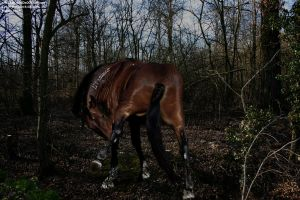 Itchy Forest by RemorseHP