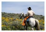 A Cowboy And His Horse by Astraea-photography