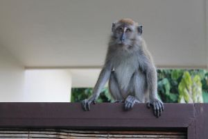 Monkey :) by Willowtreesong