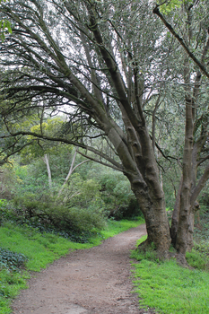 Golden Gate Park 2014 Path by MysticEden