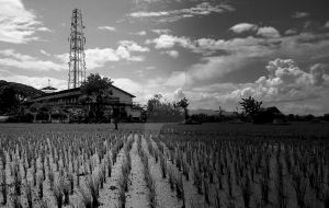 Rice Field by ahape