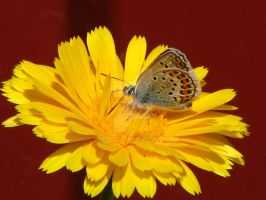 Butterfly on the flower. by Daramoon
