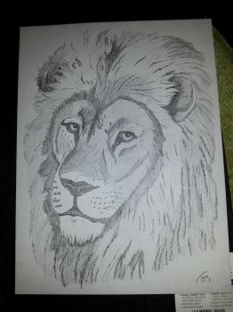 Lion shading by numbers. by weejuds