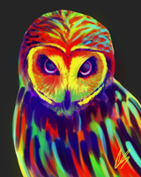 Technicolor Owl by DoubletheU