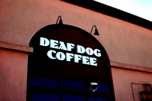 Deaf Dog by ashleyyphotograph101
