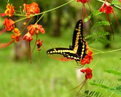Butterfly by Evander757