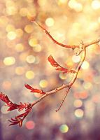 Gold sparkle spring by LaChatRose