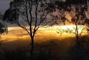 Sunrise in the Yarra Valley by yeahBISH