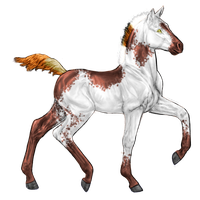 Arabian Colt Design-SOLD by Hell-Raiser-Neko