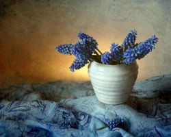 Blue and white by Luciuuu