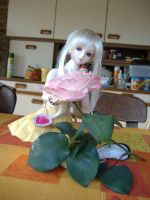 Rose in the kitchen by Lo-Relei